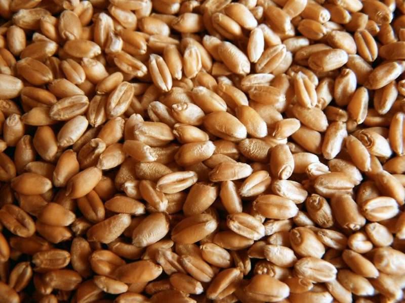 wheat-seed