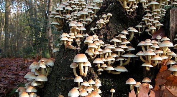 Mushroom Training – The Farm Visor